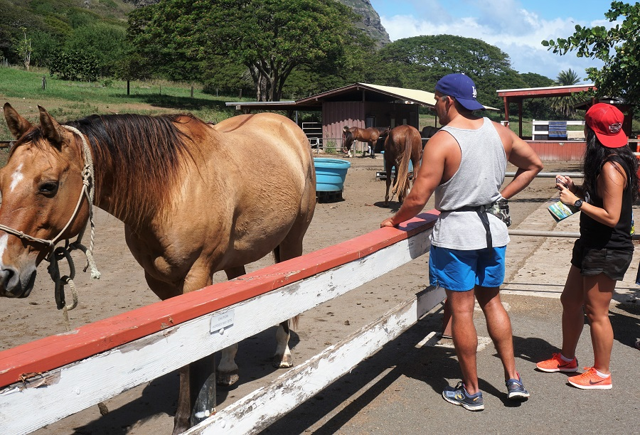 Kualoa Ranch Horses