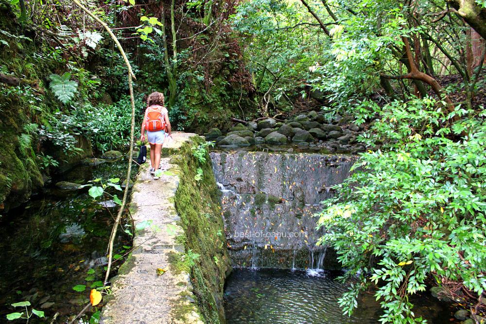 Lulumahu Falls Hiking Path