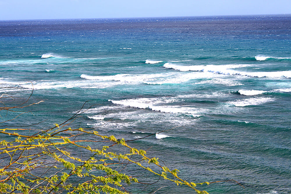 Diamond Head Beach waves
