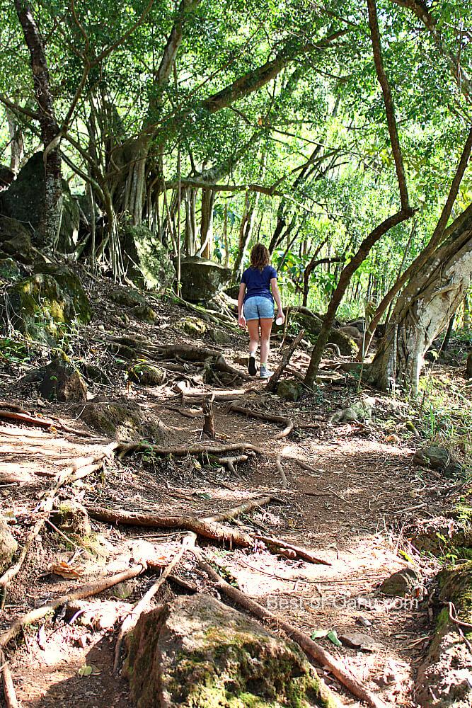 Ehukai Pillbox Trail
