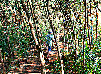 Ehukai Pillbox Hiking Trail