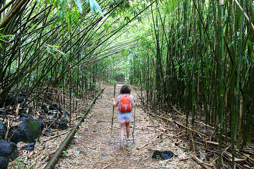 Kaniakapupu Trail