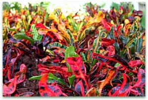 Hawaii Tropical Plants