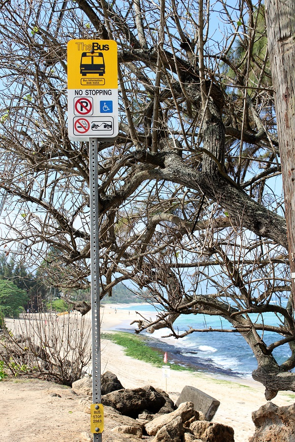Laniakea Beach Bus Stop