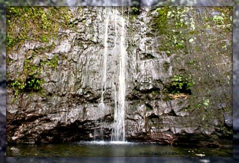 Manoa Falls Oahu
