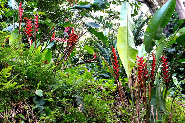 Manoa Falls Flowers