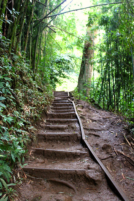 Hiking Manoa Falls