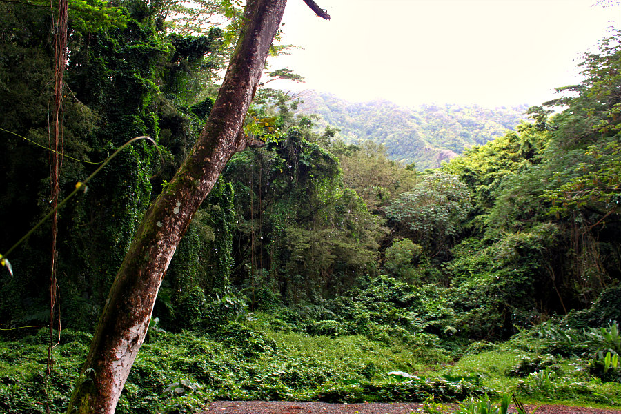 Manoa Falls Valley