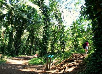 Maunawili Falls Path