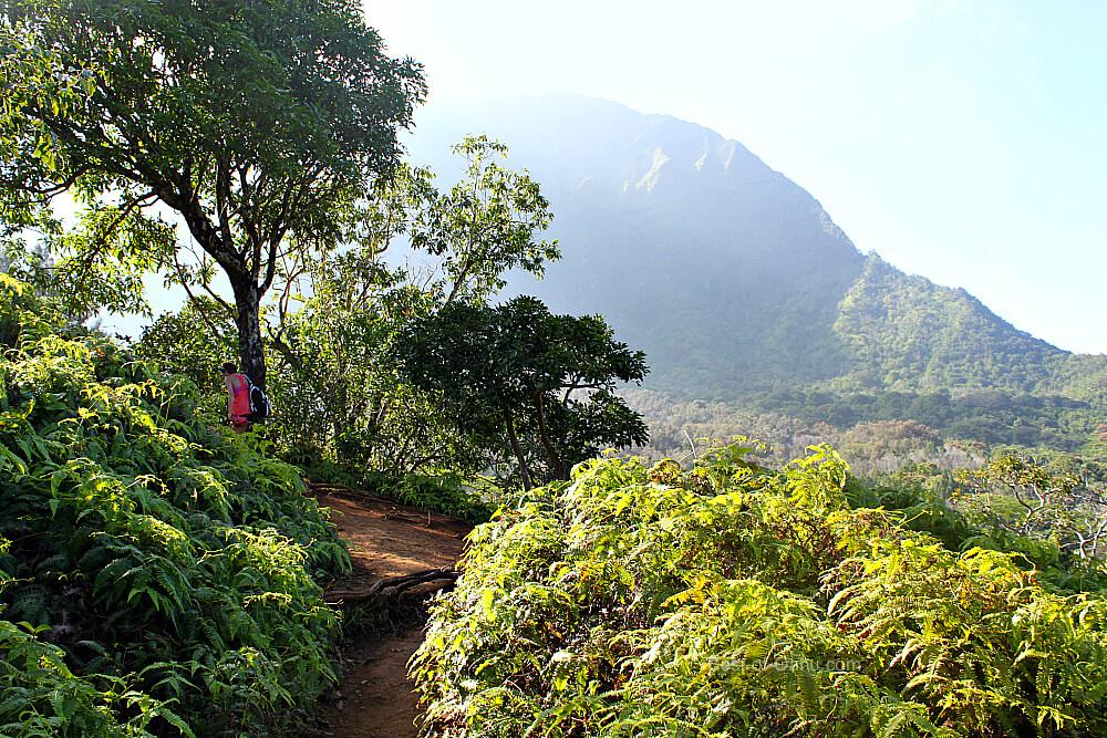 Maunawili Falls Trail View