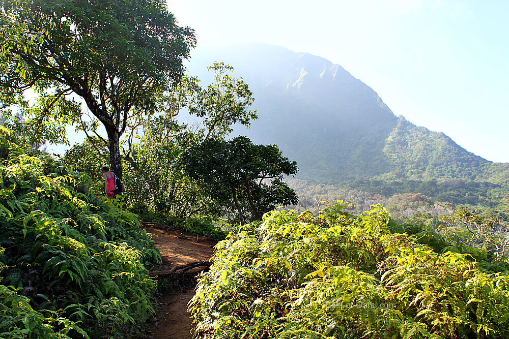 Maunawili Falls View