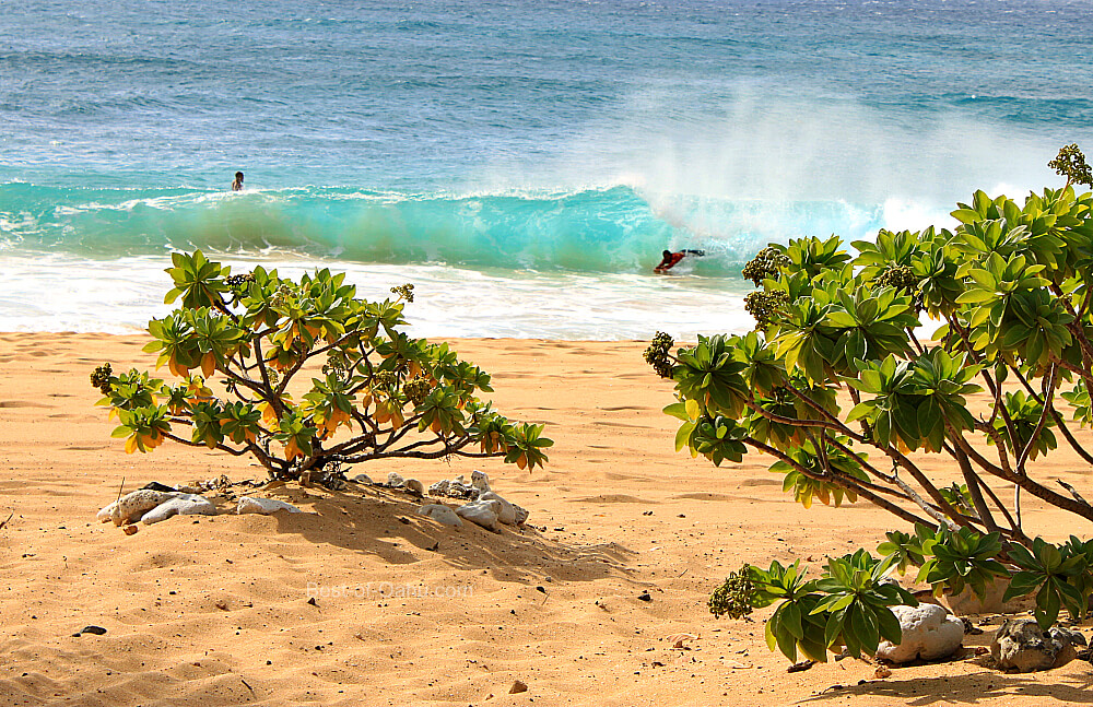 Sandy Beach Bodysurfing Oahu
