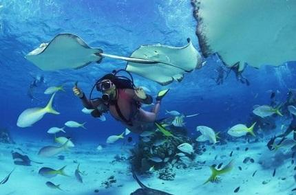 Hasil gambar untuk hawaii scuba diving