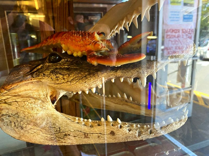 Tamashiro Market Alligator Head