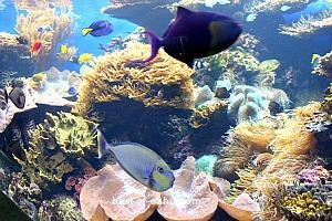 Waikiki Aquarium Fish
