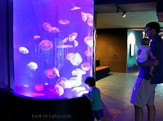 Waikiki Aquarium Exhibit