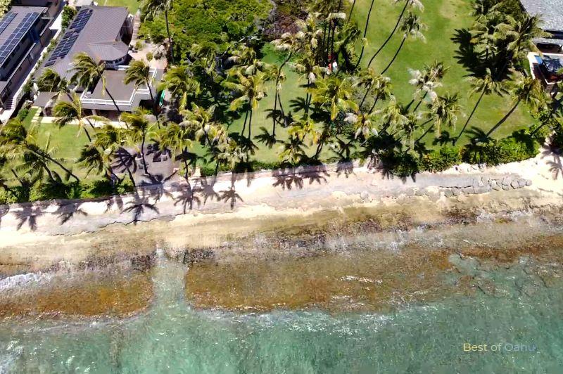 Diamond Head Beach Palms