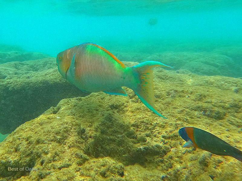 Hanauma Bay Fish