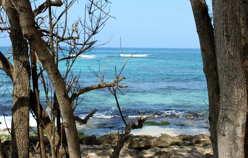 Laniakea Beach View