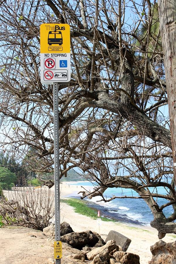 Laniakea Beach Bus Stop