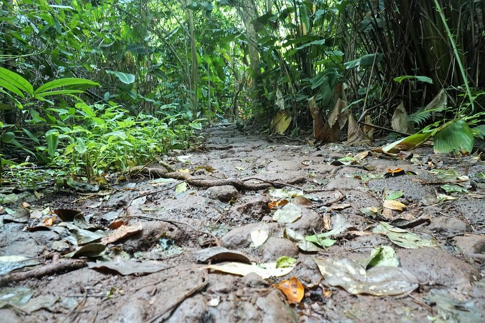 Likeke Falls Path