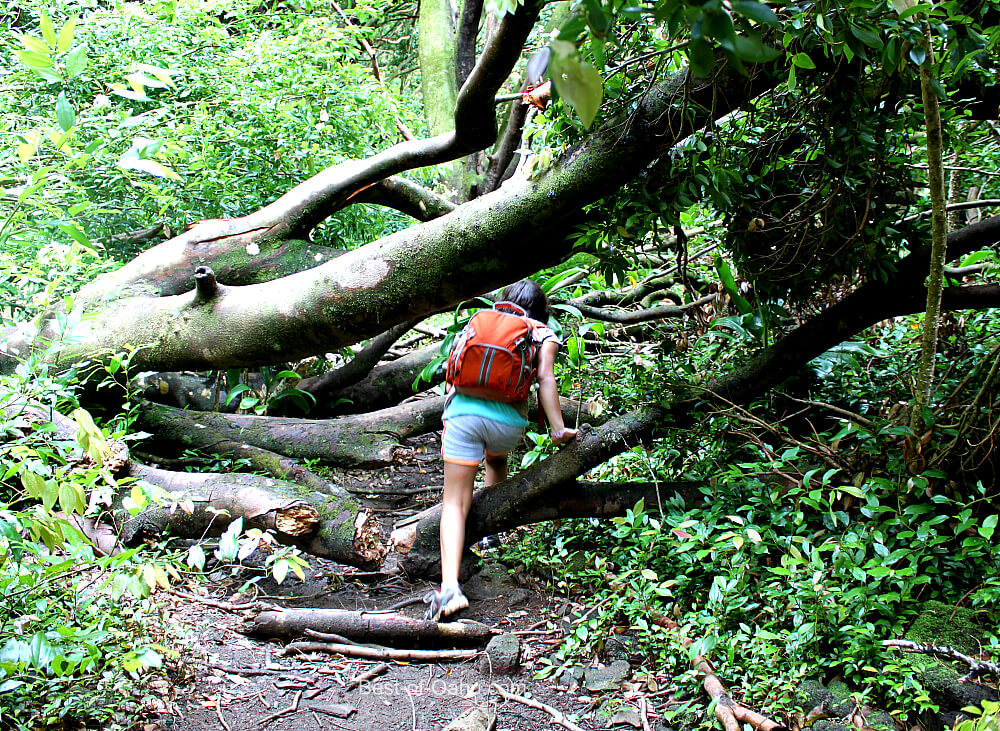 Lulumahu Falls Hiking Trail
