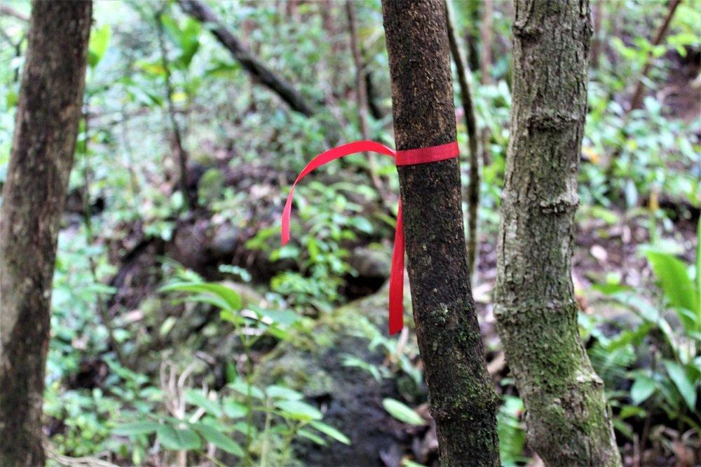 Lulumahu Falls Hiking Ribbons