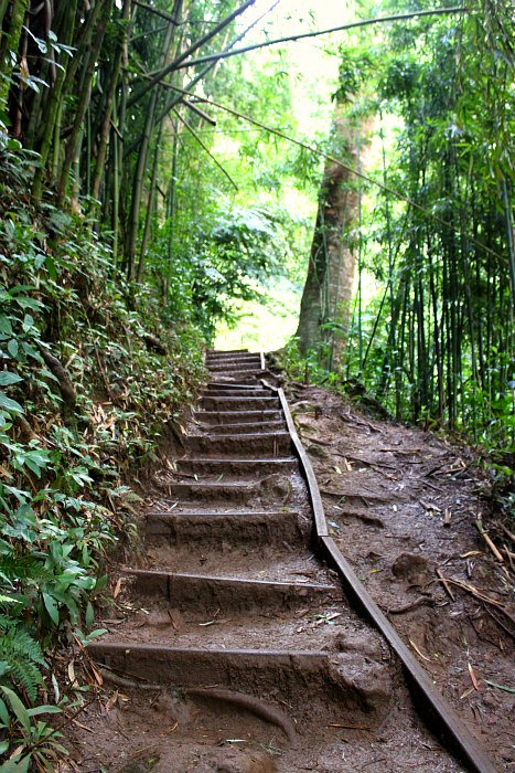 Manoa Falls Steps