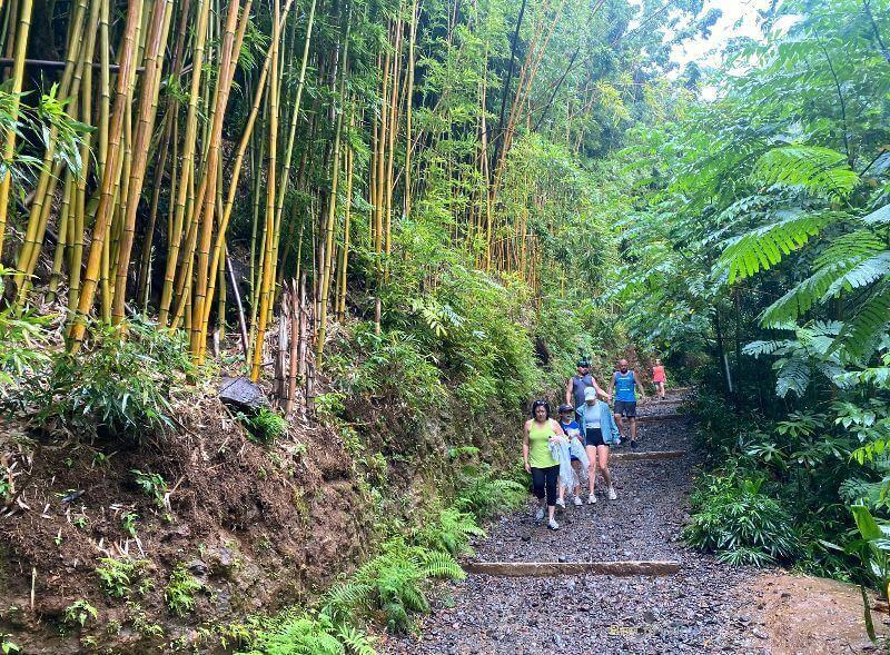 Manoa Falls Trail View