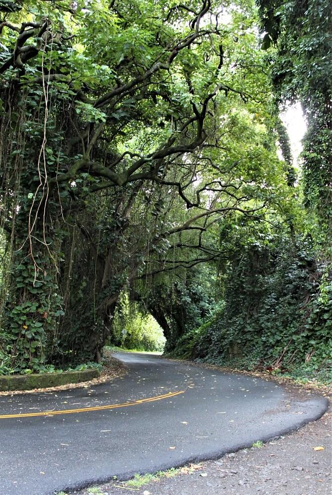 Old Pali Road