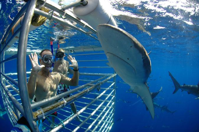 Shark Cage Dive