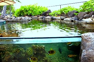 Waikiki Aquarium Outdoor Exhibit
