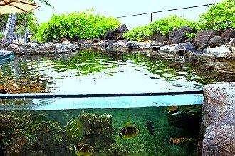 Waikiki Aquarium Reef
