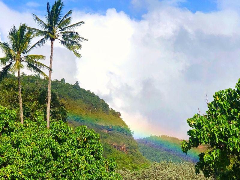 Waimea Valley Rainbow